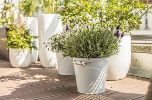 Biele kvetináče na terase, levanduľa vo vedre