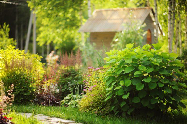 Lunárny kalendár pre záhradkárov - jún