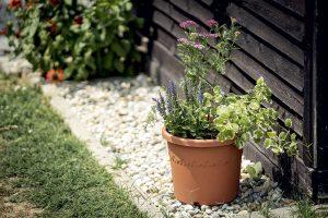 Trvalky v kvetináči