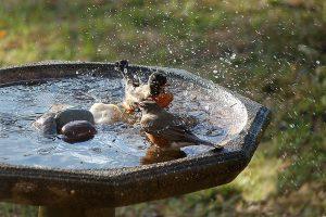 Vtáky v napájadle