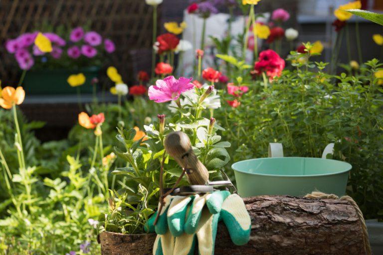 6 tipov na júnové práce v kvetinovej záhrade