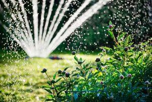 Ako a kedy správne zalievať záhradu