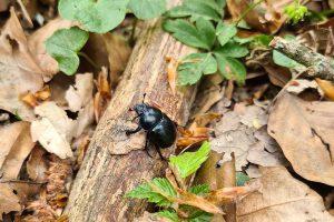 Chrobák v lese na dreve