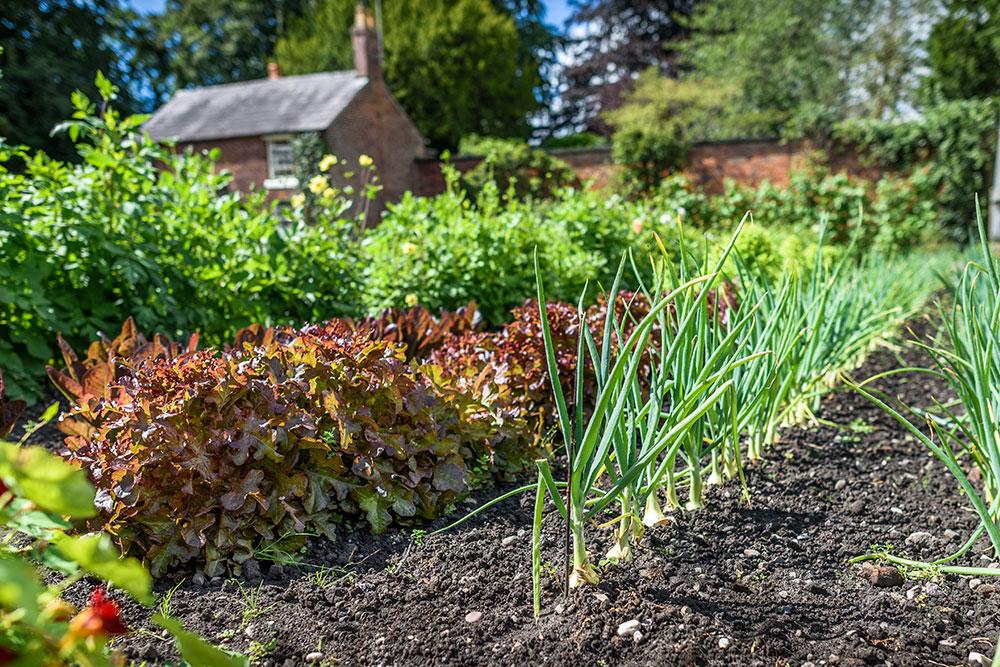 Júl v úžitkovej záhrade: Tieto práce nevynechajte