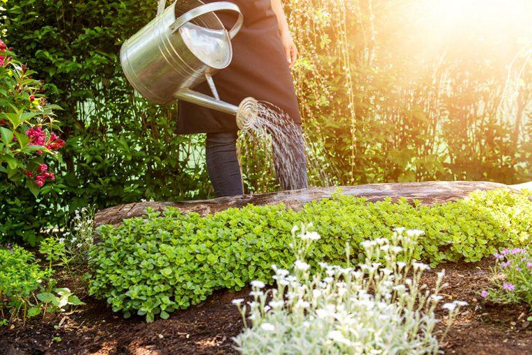 Ako hospodáriť s vodou v záhrade?