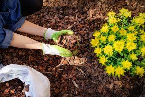Je pravda, že mulčovanie borovicovou kôrou zastavuje rast rastlín?