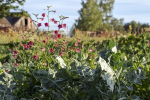 Záhrada ekologicky: Ako hnojiť bez chémie?