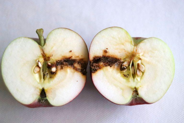 Obaľovač jablčný
