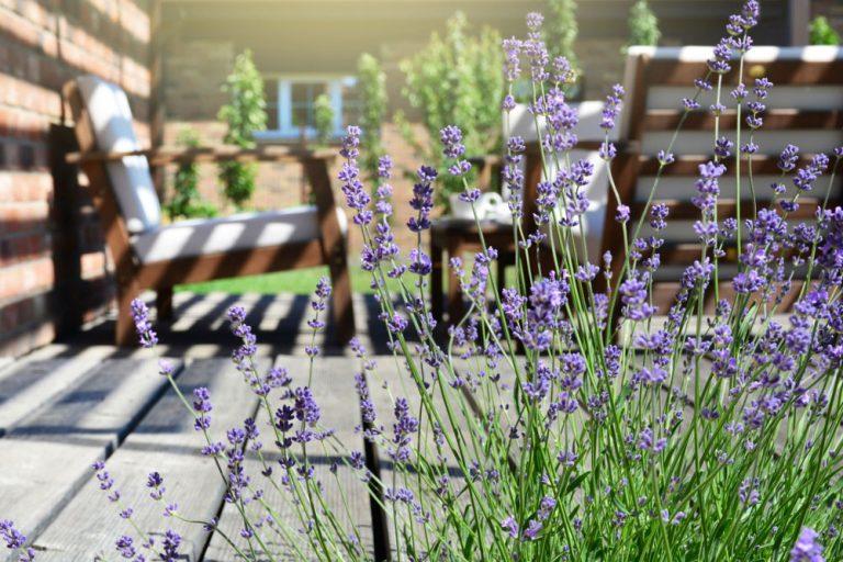 Levanduľa v záhrade, terasa