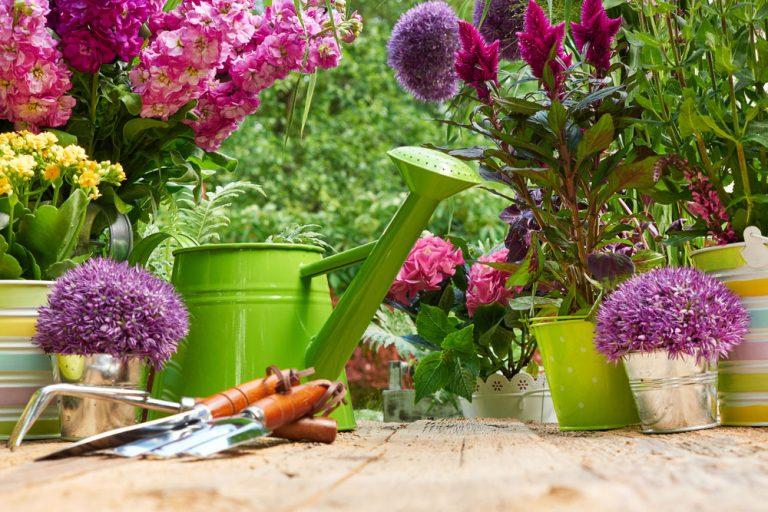 Júl v okrasnej záhrade: O tieto rastliny sa treba postarať práve teraz