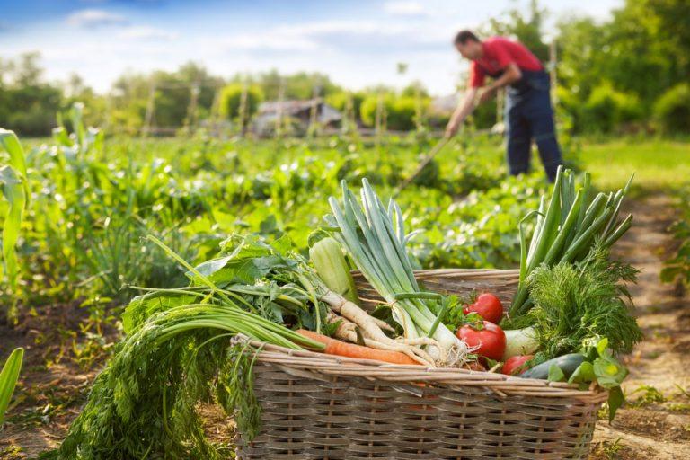 August v úžitkovej záhrade: Nevynechajte letný rez a postarajte sa o tieto rastliny