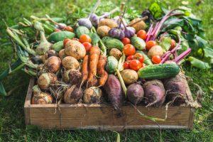 Úroda zeleniny zo záhrady