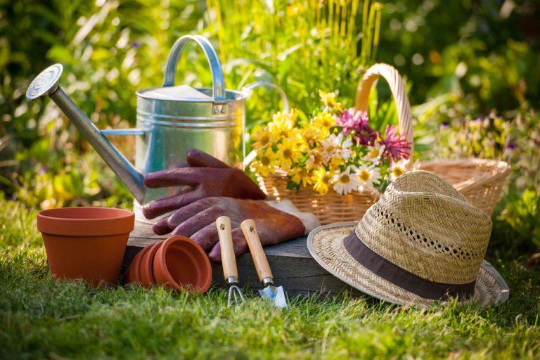Tieto augustové práce v okrasnej záhrade nevynechajte