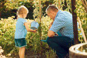 Dedko s vnučkou polievajú paradajky