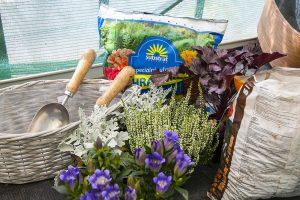 Materiál a rastliny na jesennú výsadbu kvetov