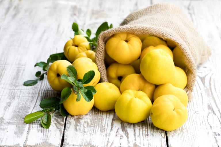 Dula: V minulosti bežné ovocie, ktoré sa postupne vytratilo zo záhrad