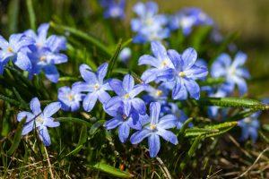 Modravka