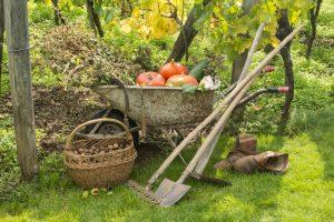 Ako sa postarať o zeleninovú záhradku na jeseň