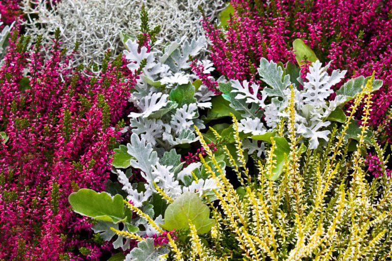Vysaďte si tieto kvety a balkón bude rozkvitnutý až do prvých mrazov