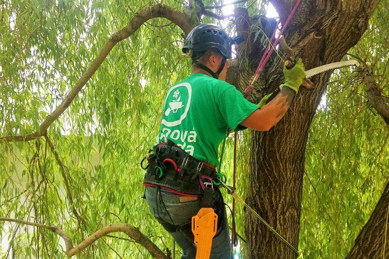 Pílenie starého stromu