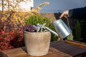 Polievanie jesennej výsadby