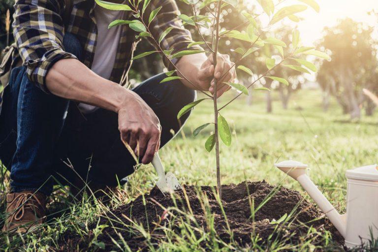 Ktoré ovocné stromy vysádzať na jeseň a ktoré radšej na jar?