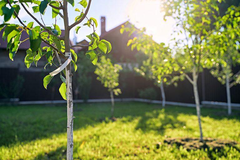 Rýchlokurz pre začiatočníkov: Výsadba ovocného stromčeka