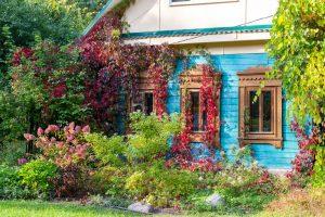 Starý dom obrastený paviničom, divoká predzáhradka