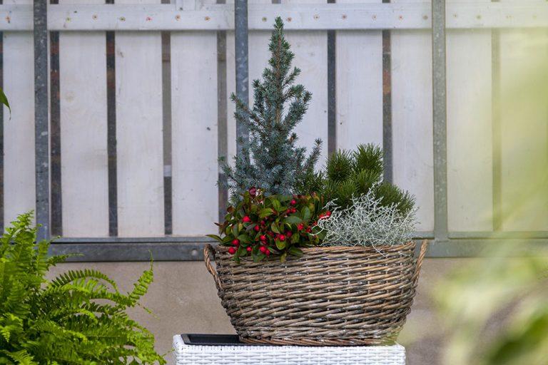 Je čas na výsadbu adventnej dekorácie. Necháte sa inšpirovať?
