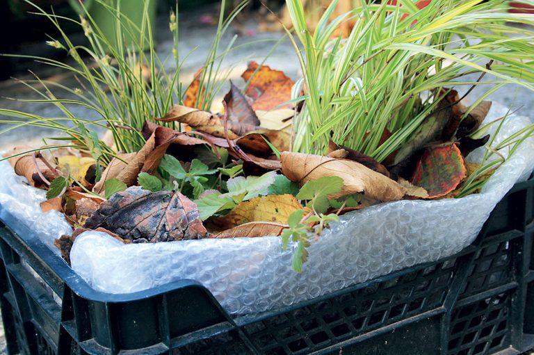Zazimovanie rastlín v nádobách