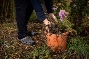 Trvalky v kvetináči, neskorá jeseň