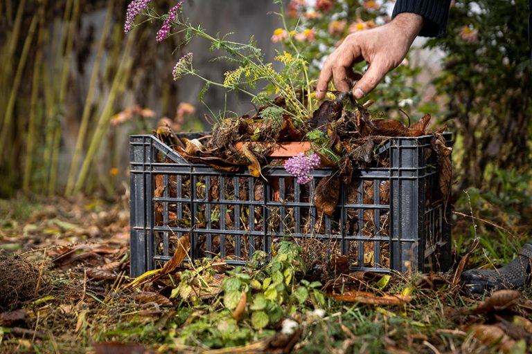 Na zazimovanie trvaliek ešte nie je neskoro. Ako sa postarať o tie v kvetináči?