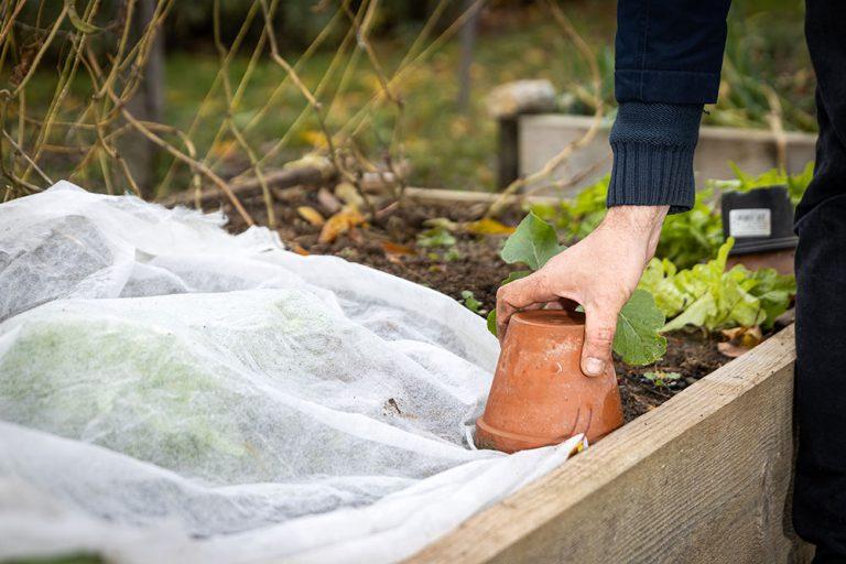 Ochrana zeleniny pred mrazom