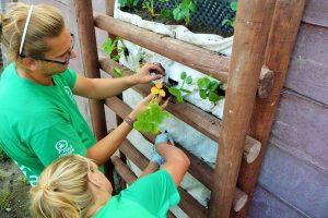 Vysádzanie rastlín do zelenej steny