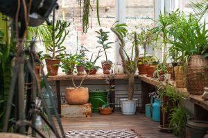 Ako sa starať o izbové rastliny počas zimy?