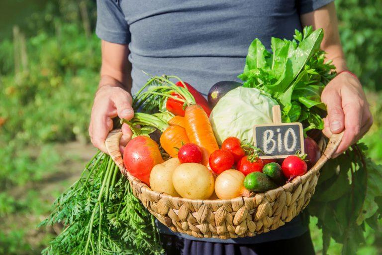 Veľký prehľad, kedy vysievať semená, vysádzať priesady a zberať obľúbené druhy plodovej a koreňovej zeleniny