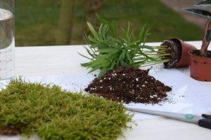Substrát, mach a rastlina na výrobu kokedamy