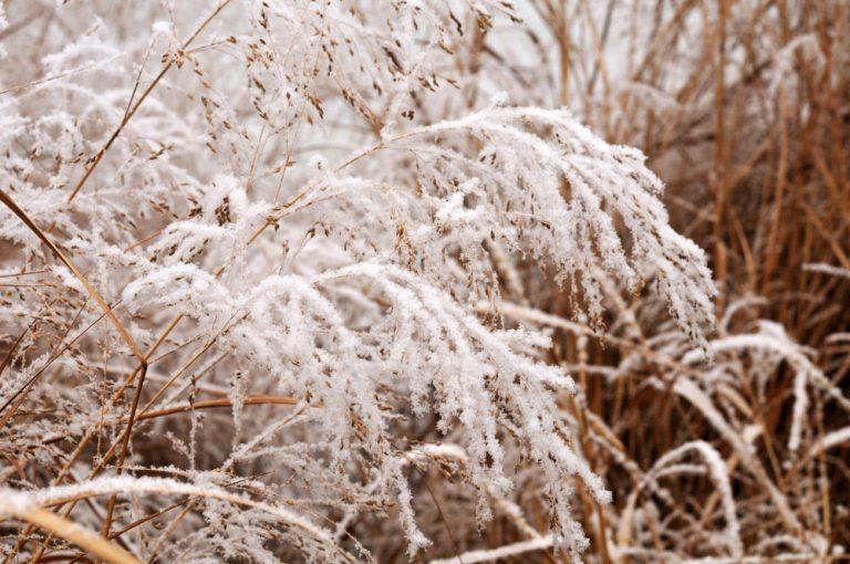 Aj v januári môže záhrada zaujať. Toto je 5 rastlín, ktoré to rozhodne dokážu