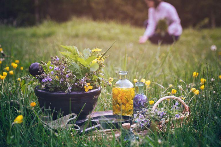 Bylinková škola: Nechajme sa viesť hlasom prírody a záhrada bude prekvitať