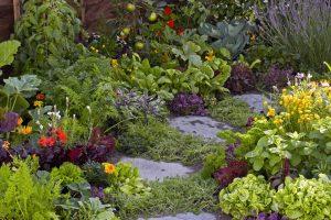 Polykultúrna záhrada