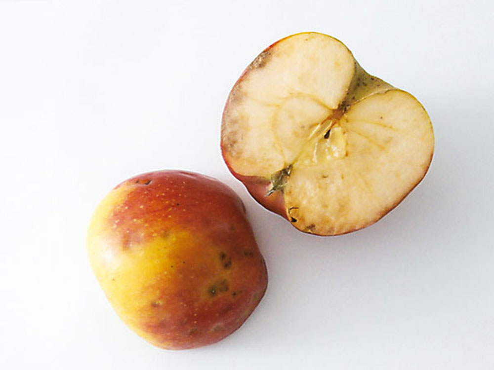 pehovitost jablk 1