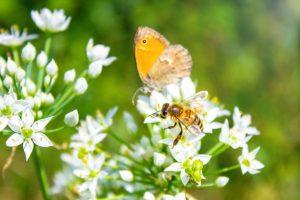 Hmyz v záhrade