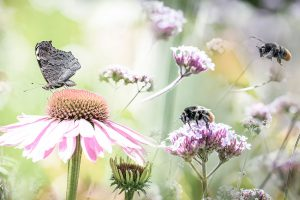 Hmyz na kvetoch