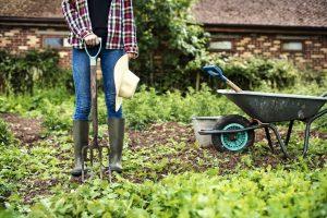 Žena v záhrade, fúrik, náradie, rýľovacie vidly
