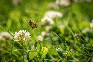 Včela na ďateline