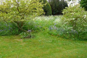 Kvetinová lúka v kombinácii s bylinkovým trávnikom