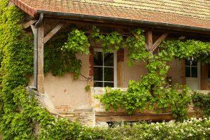 Starý dom obrastený popínavkami