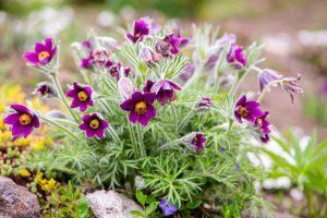 Viete, ktoré rastliny zdobia záhradu v apríli? Z týchto si určite vyberiete