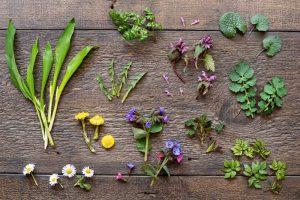 Rôzne jarné bylinky na drevenom stole
