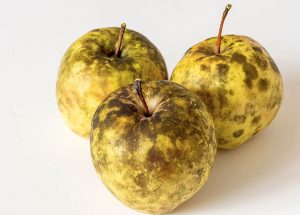 Ako si poradiť so sadzovitosťou jabĺk?